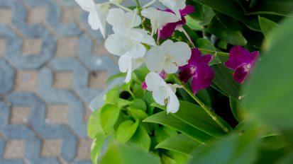 Villa Nabu - perfect touches